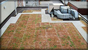 Green Flat Roofing