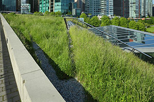 Green Roof on a Condo
