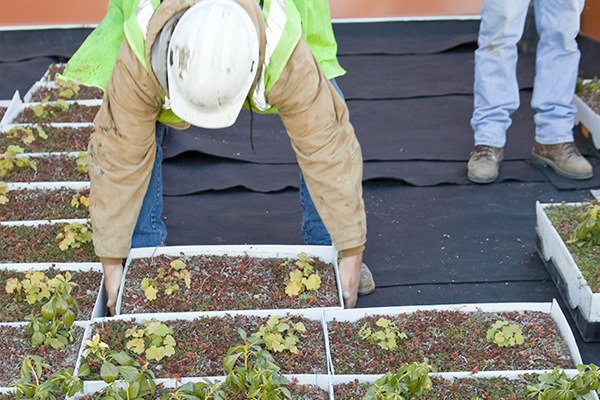 A roofing expert installing plants on a building rooftop
