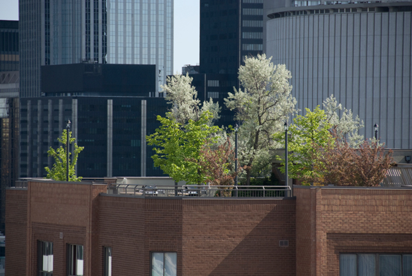 Rooftop garden on a commercial building in downtown