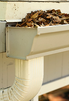 Leaf Clogging Gutter and Downspout