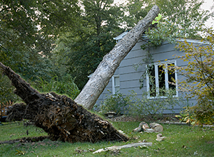 Damage Due to High Winds in Toronto